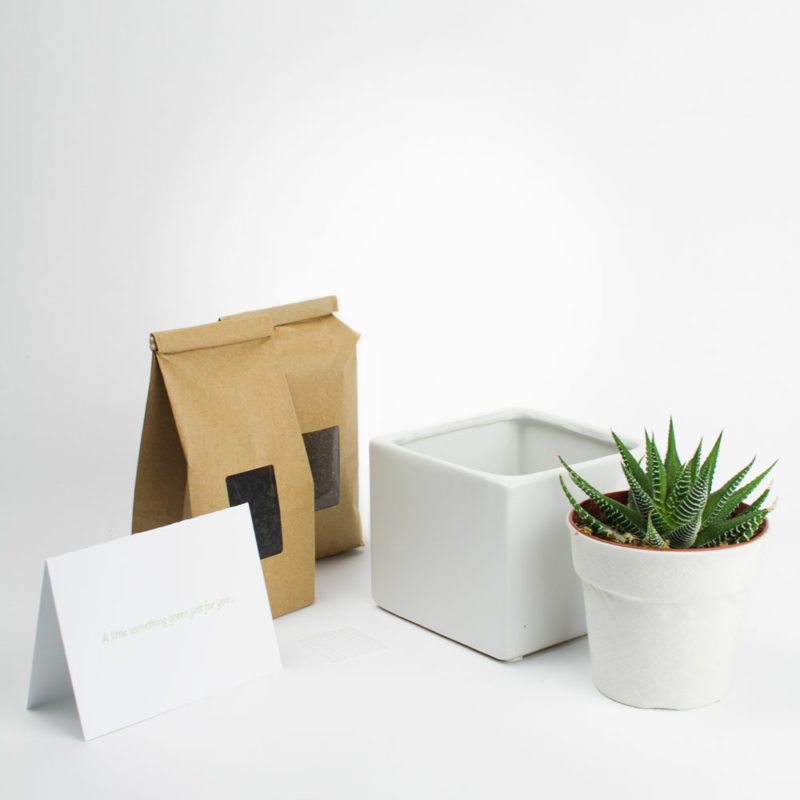 Juicy Collector Kit - a minimalist succulent planter DIY kit with 1 plant