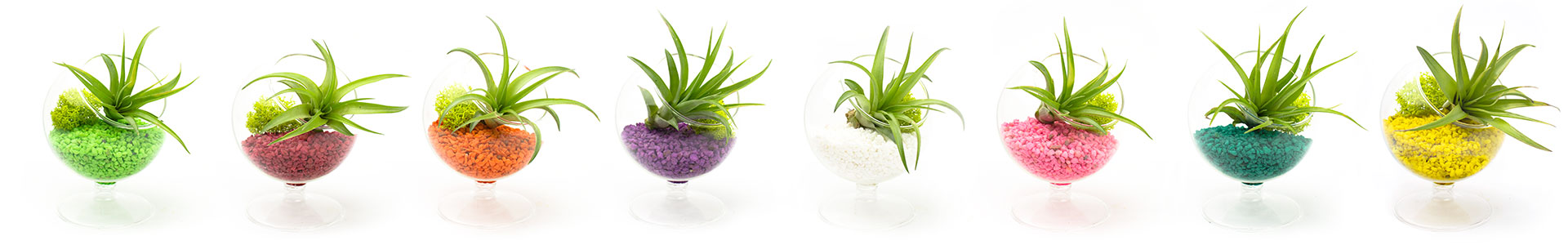 Juicy Gumdrops Mini Air Plant Terrariums by Juicykits