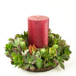 Juicykits Succulent Holiday and Christmas Wreath with Red Candle