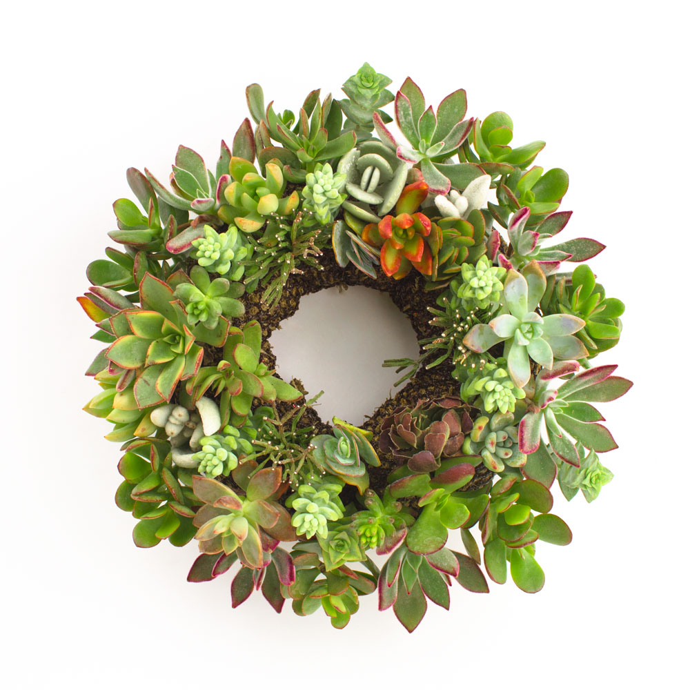 Juicykits Succulent Wreath for the Holidays