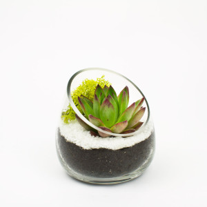 Baby Sideways DIY Terrarium with Echeveria