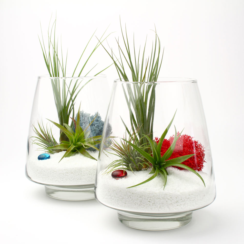 The Arrowhead DIY Air Plant Terrarium Kit Juicykitscom