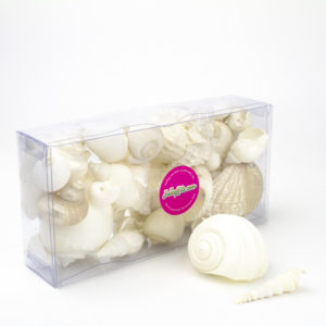 Assorted Seashells Terrarium Decorations